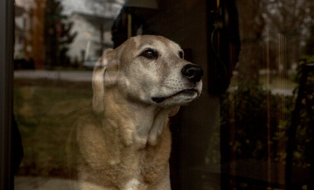 The Pain of Loving Old DogsThe New York Times, 25 February 2018